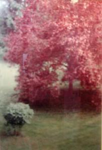 seton.red.treel