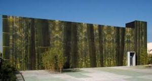 The Cisneros Foundation